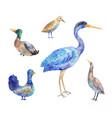 set of birds living in a swamp heron bittern vector image vector image