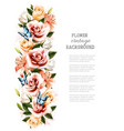 flower background with beautiful roses and vector image vector image