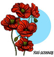 hand drawn red poppies floral design element vector image vector image