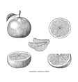 grapefruit collection hand draw vintage clip art vector image vector image