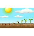 Growing plant from seed in the ground vector image vector image