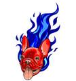 pug head carlino dog face vector image vector image