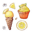 set citrus ice cream and cupcake vector image vector image