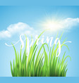 frash spring green grass background vector image vector image