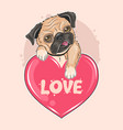 pug dog valentine puppy artwork vector image vector image