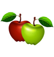 Fresh green and red apples vector image