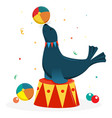 fur seal on a circus stand with a ball circus vector image vector image
