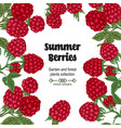 hand drawn background with summer berries vector image vector image