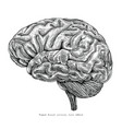 human brain lateral view hand drawing vintage vector image vector image