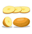 whole vegetable potato vector image