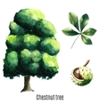 Chestnut tree watercolor vector image vector image