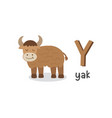 alphabet letter y and yak vector image vector image