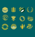cereal ears and grains agriculture industry or vector image vector image
