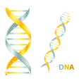 gold and silver dna icon on vector image vector image
