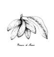 hand drawn of banana de macaco fruits on white bac vector image vector image