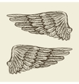 Hand drawn vintage wings Sketch vector image vector image