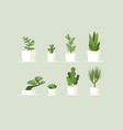 houseplant in pots vector image