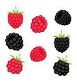 set berries raspberry and blackberry vector image vector image