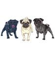 set cute dog pug breed vector image