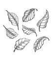 the leaves of the sketch set hand drawn vector image vector image