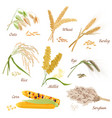 Cereal Plants icons Oats