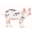 Cute pig isolated at the white background vector image