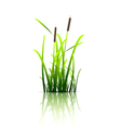 Grass green reed vector image