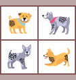 happy dogs icons collection on vector image vector image