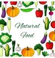 Vegetables poster natural vegetarian food veggies vector image vector image