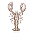 lobster hand drawing vintage engraving vector image