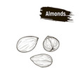 outline image almonds vector image vector image