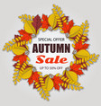 autumn sale poster of discount with fall leaves vector image