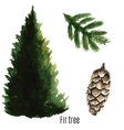 Fir tree watercolor vector image vector image