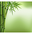green bamboo grove isolated on background vector image