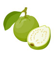 guava tasty edible tropical green fruit icon vector image vector image