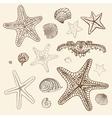 Sea Starfish set Hand drawn vector image