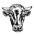 black contour portrait cow vector image vector image