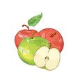 red and green apples hand drawn vector image