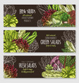 salads and leafy vegetables banners set vector image vector image