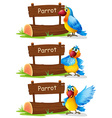 parrot standing next to sign vector image vector image