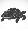 Turtle on white background vector image