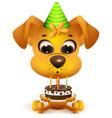 birthday yellow dog holding cake vector image