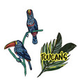 with toucans vector image