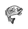 crappie fish jumping up mascot black and white vector image vector image