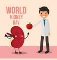 doctor giving apple to cartoon kidney vector image