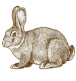 engraving rabbit vector image vector image