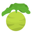 green eco cabbage icon isometric style vector image vector image