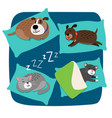 sleeping dogs and cats vector image