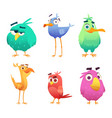 cartoon funny birds faces cute animals colored vector image