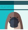 Platypus Flat Postcard vector image vector image